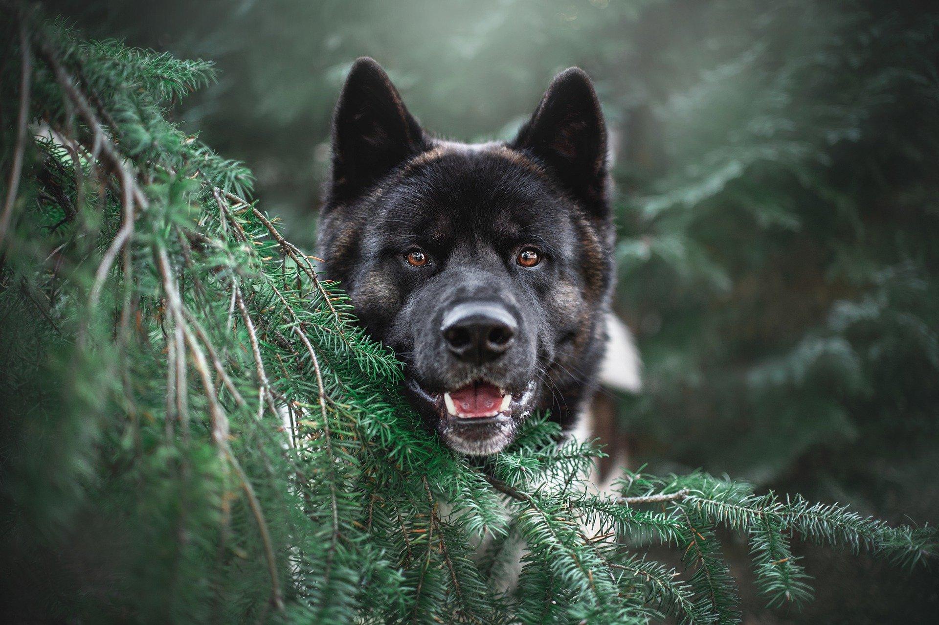 Dermatite nel cane, sintomi generali e come riconoscerne la tipologia